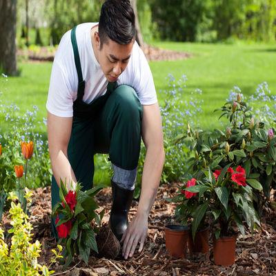 Empresa De Jardinagem Na Cidade Monções
